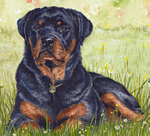 rottweilersinneed.co.uk logo designed and copyrighted by Hils Illustration